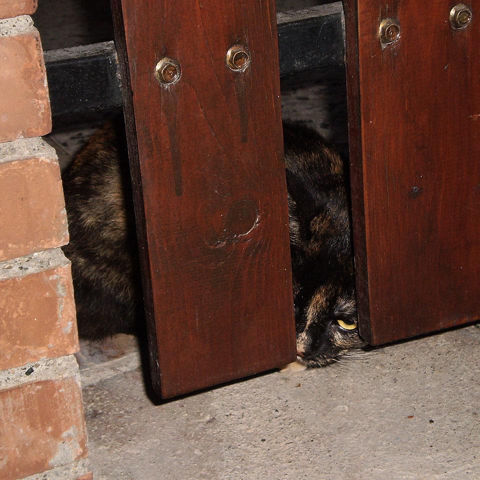 L'altro mio gatto nero nascosto dietro una staccionata.